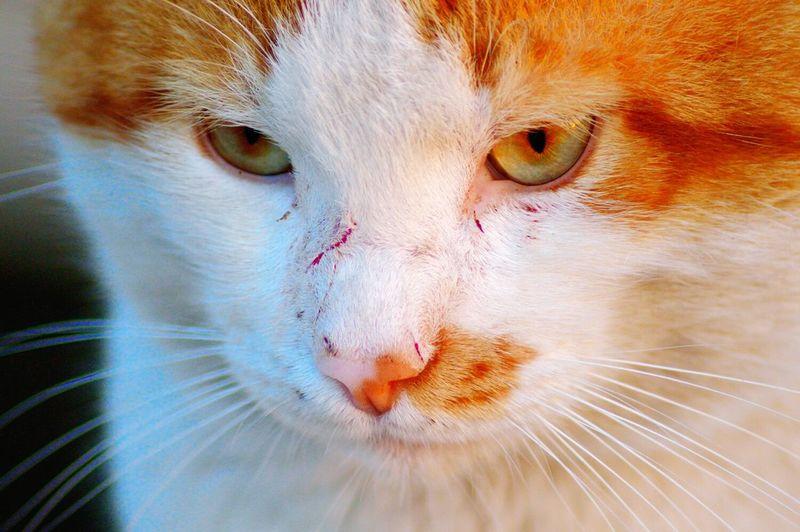 Cat Kedi Sarı Sarışın Bakış Blonde
