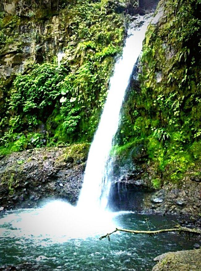The Traveler - 2015 EyeEm Awards Jungle Waterfall Tree Life Jungle Neighborhood