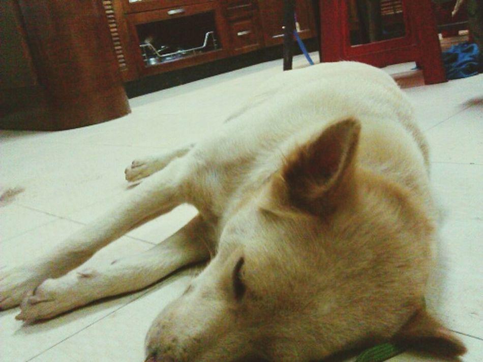 My Pet Kin Dog Cute