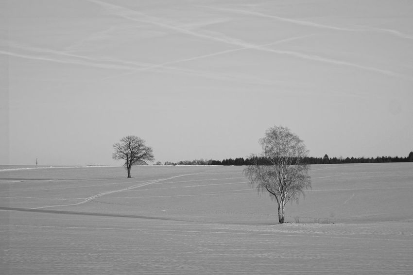 Beauty In Nature Cold Temperature Landscape Nature No People Sky Snow Tree Winter Sachsen Mittelsachsen Oederan