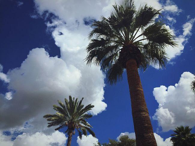 Palms and popcorn Clouds Phoenix Winter