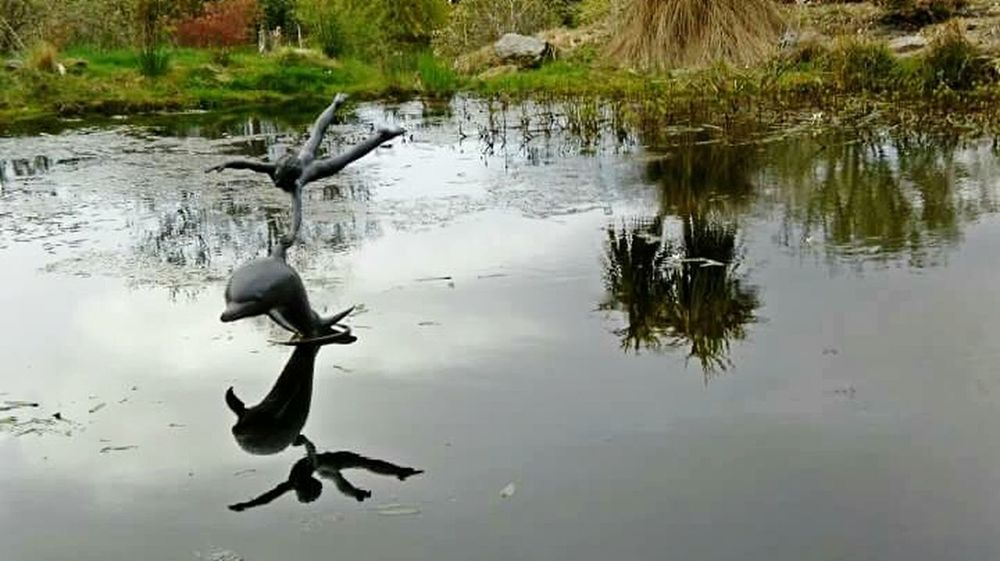 2010, Port Appin Reflection Scottish Highlands Scotland Relaxing Park Pond Botanic Garden Port Appin