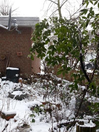 Snow in Düsseldorf. Afternoon. Duesseldorf Timetracking