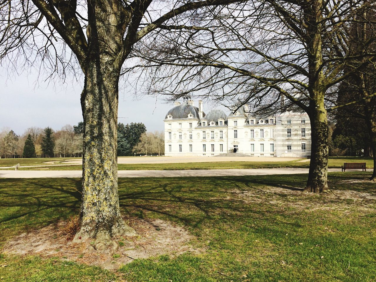 tree, built structure, architecture, building exterior, bare tree, history, day, no people, grass, branch, outdoors, nature