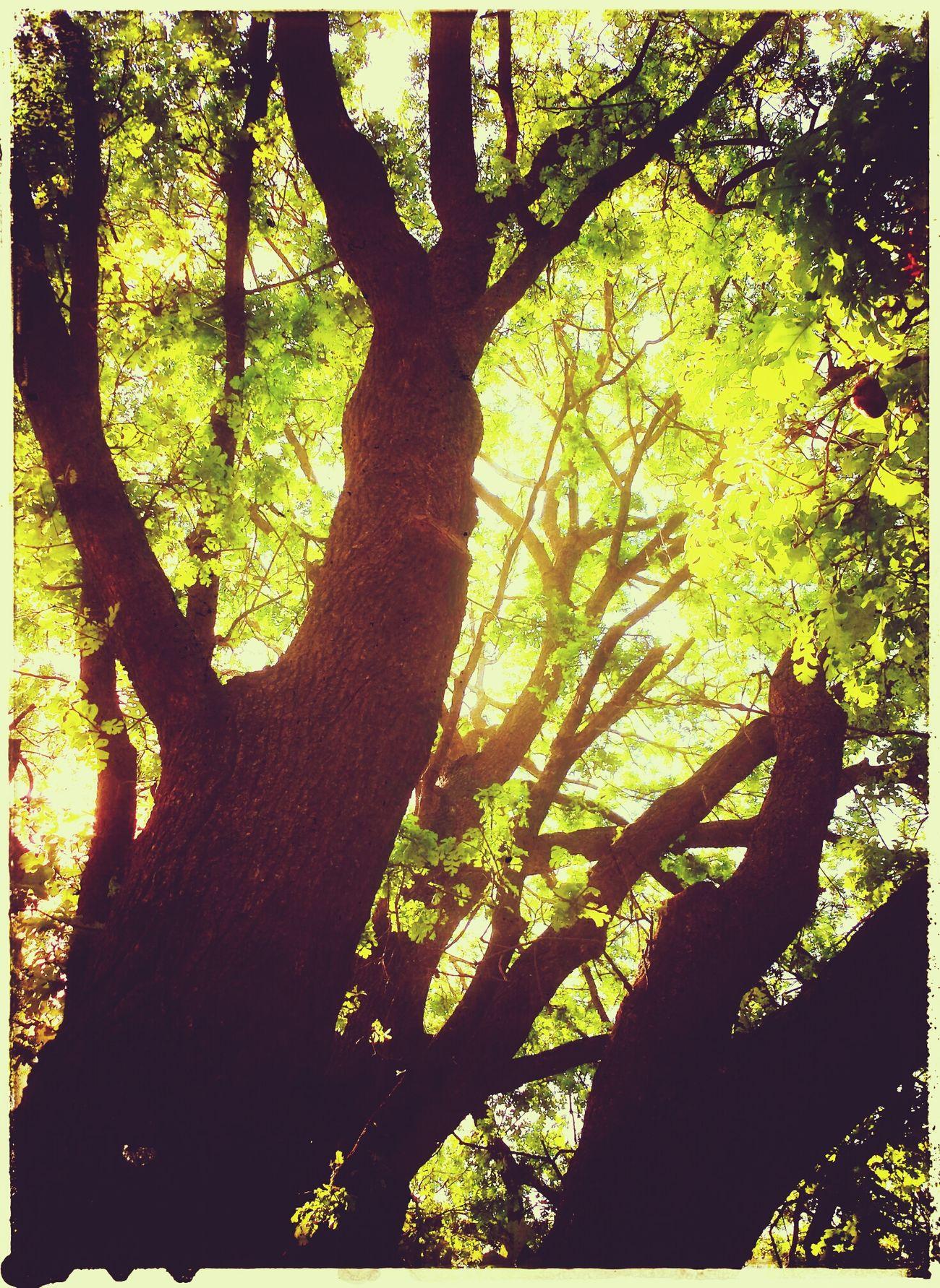 Hugging A Tree Sun Light Wonhglück Natures Beauty...