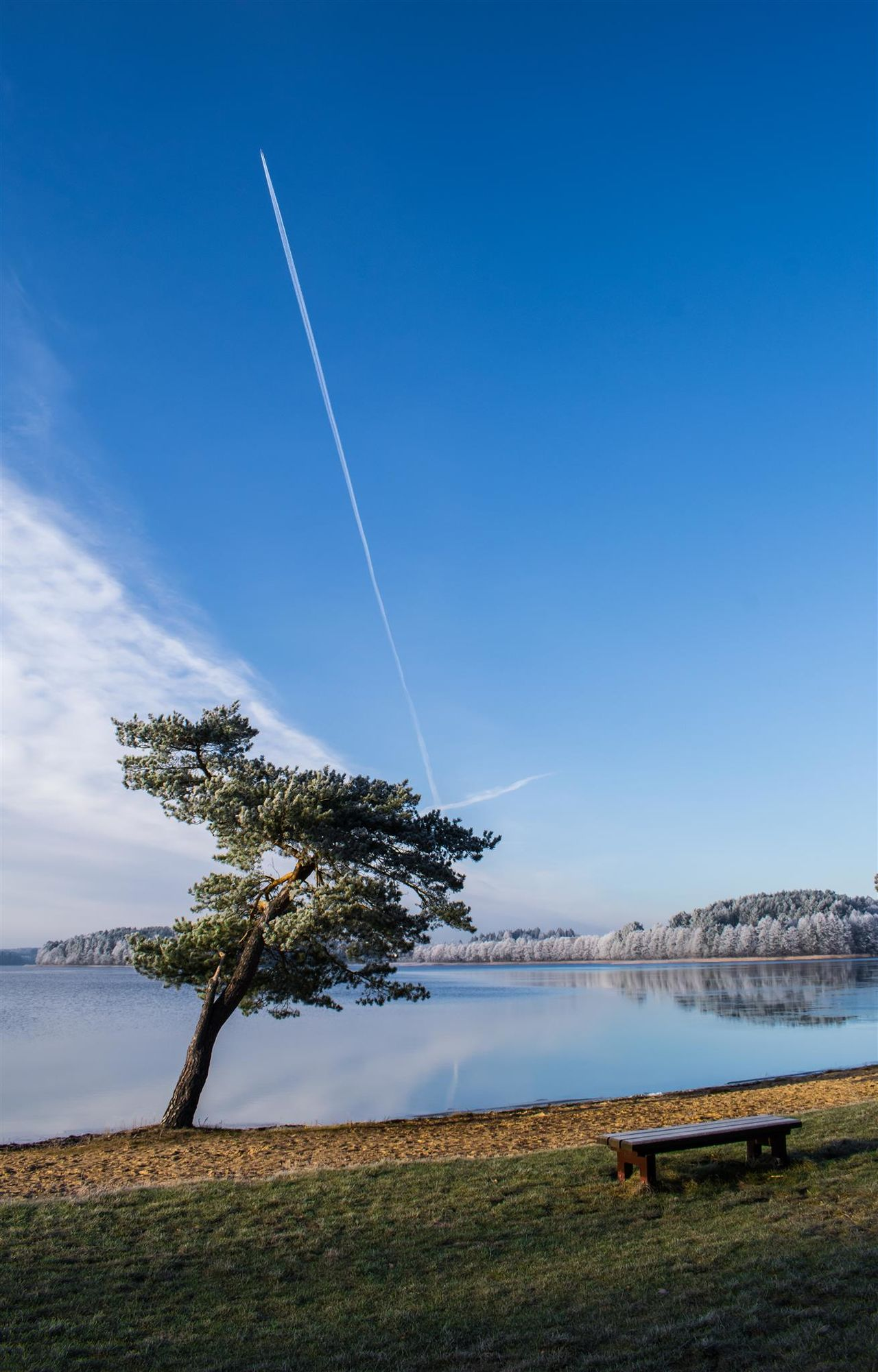 Tree Reflection Chill Place Cold Temperature Winter Tranquility Cloud - Sky Sky Water Nature Blue Landscape No People Outdoors Clear Sky Beauty In Nature Airplane Flying Day