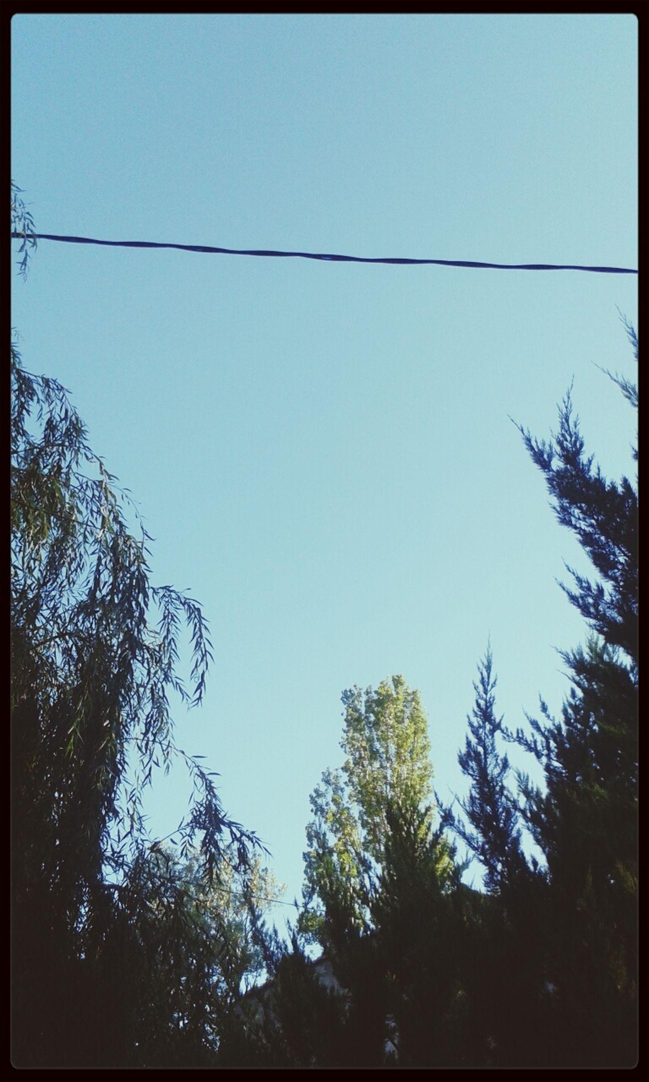 Natur Skie Trees