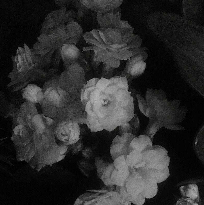 Kalanchoe Fiori!!! Flowers Nature Monochrome Blackandwhite