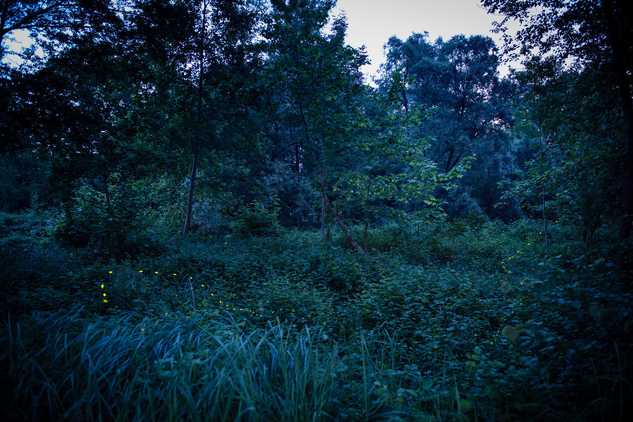Oasi Fontane Bianche at night At Night Fireflies Fireflies In The Night  Grass Idyllic Landscape Mistery Atmosphere Nature Night Night Photography Night View Non Urban Scene Outdoors Tranquil Scene Tranquility Tree WoodLand Pivotal Ideas