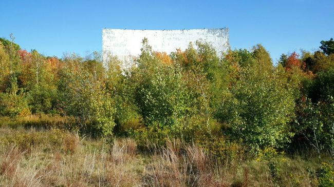 Abandoned Places Drive-in Theater Close-up Blue Sky Clear Sky Tree Autumn Colors Fall Freshness Plant Nature Beauty In Nature Growth No People Green Color Day Scenics Tranquility Outdoors Horizontal Freshness EyeEm Best Shots - Nature S6