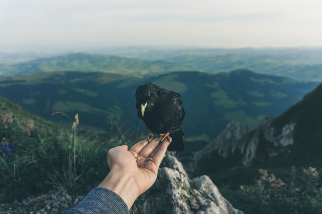 Black mountain bird sitting on a human hand in the alps, Switzerland Alps Appenzellerland Beauty In Nature Bird Bird On Hand Birds Faith Feeding Animals First Person View Holding Human Hand Mountain Mountain Bird Mountains Outdoors People And Animals POV Schweiz Swimming Swiss Alps Swiss View Switzerland Trust Vogel You And Me