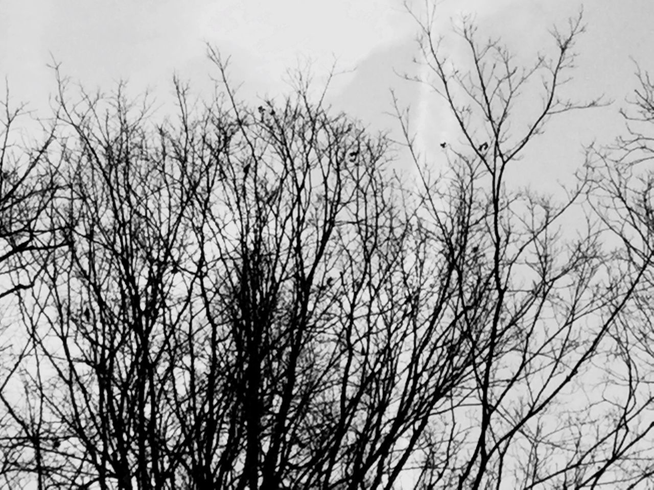 bare tree, nature, low angle view, branch, tree, sky, no people, outdoors, beauty in nature, day, bird, animal themes