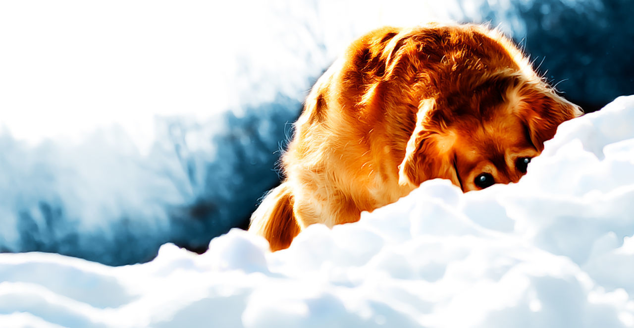 Beautiful stock photos of jagd, Animal Themes, Brown, Canine, Carnivora