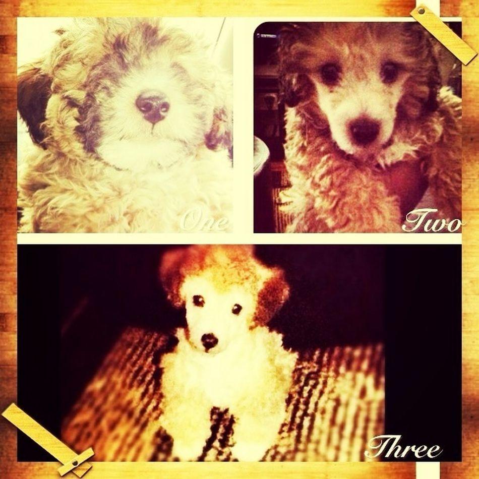 Puppy:))
