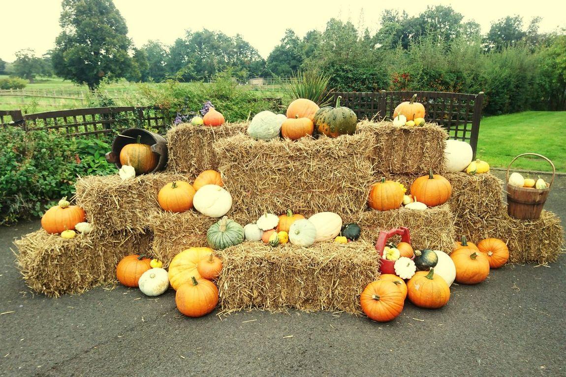 Pumpkin Nature Food Stack My pumpkin display. 😀