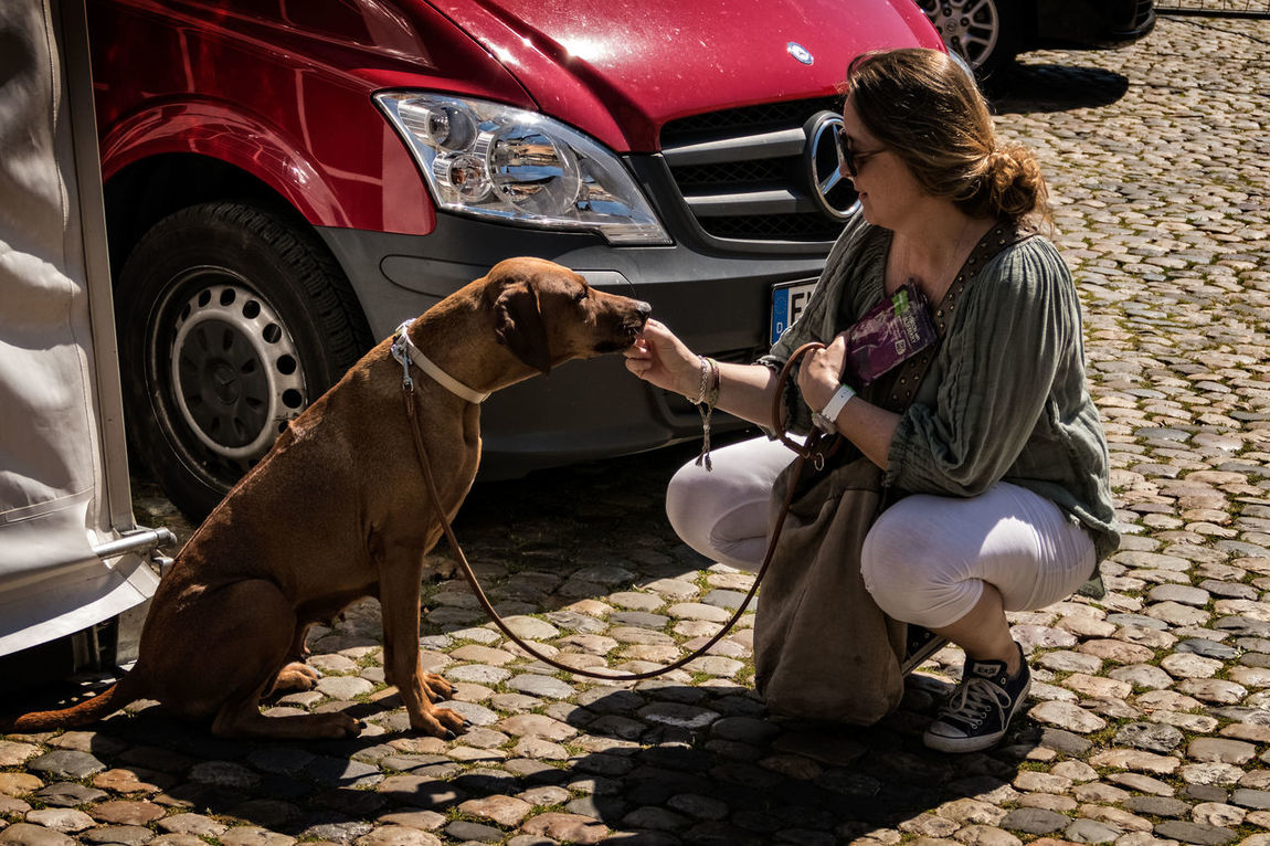 Dog owner feeding tidbit on Freiburg street Cobblestones Dog Dog Owner Lifestyles Obedience Outdoors Pet Street Street Photography Street Scene Tidbits