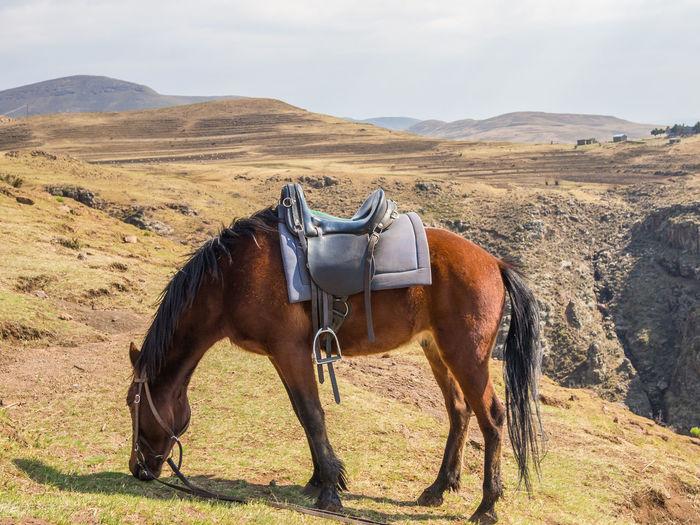 Lesotho Horse Horse Riding Basuto Nature Africa African Landscape Scenery Mountain Mountain Range