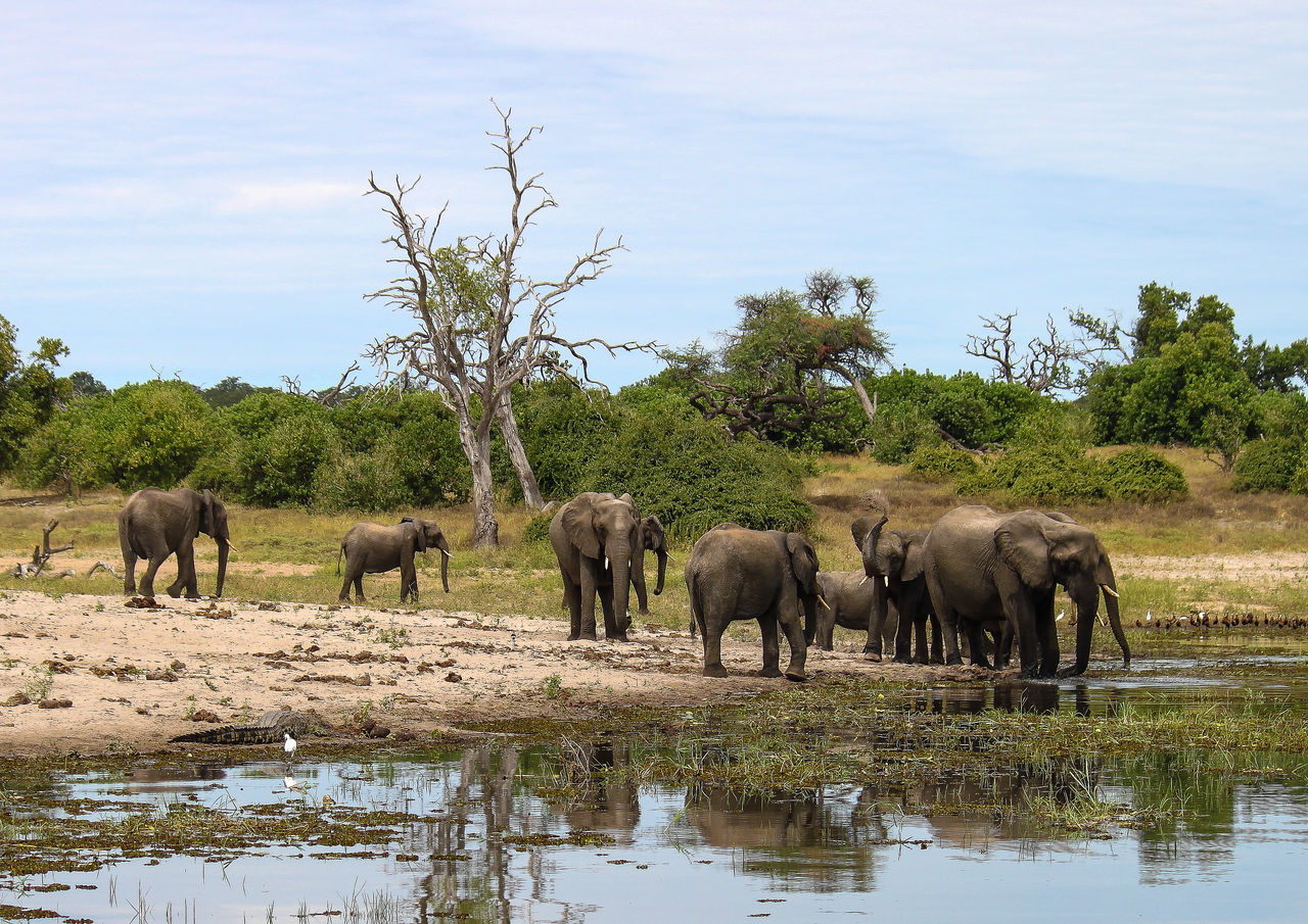 Beautiful stock photos of elefant, elephant, animals in the wild, herd, large group of animals