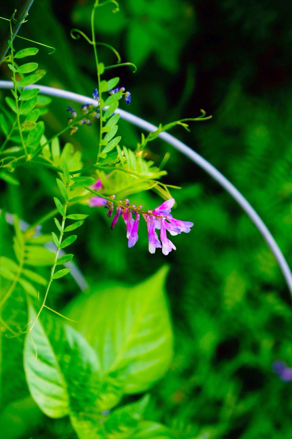 Garden Flower Nature What A Wonderful World