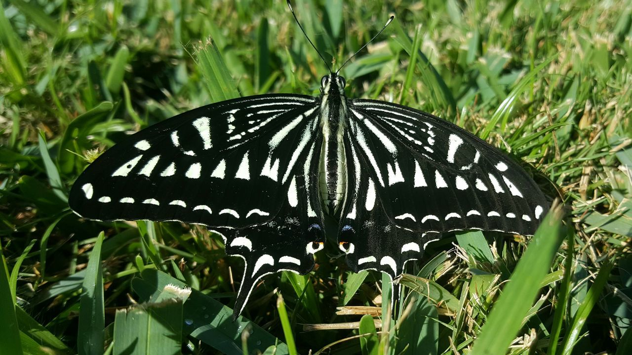 Butterfly Outdoors Close-up Insect Nature Beauty In Nature My Backyard Kauai Hawaii