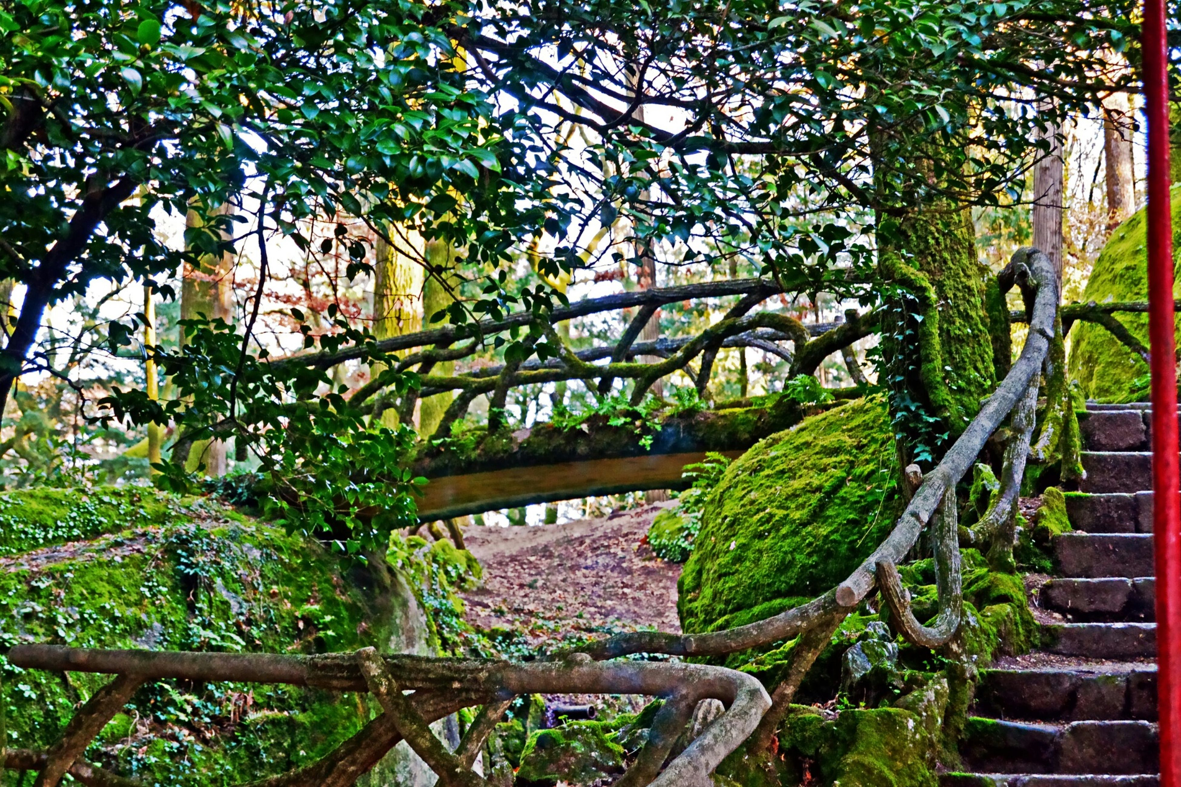 growth, tree, plant, green color, branch, railing, nature, leaf, growing, steps, fence, ivy, built structure, day, wood - material, outdoors, no people, tranquility, low angle view, metal