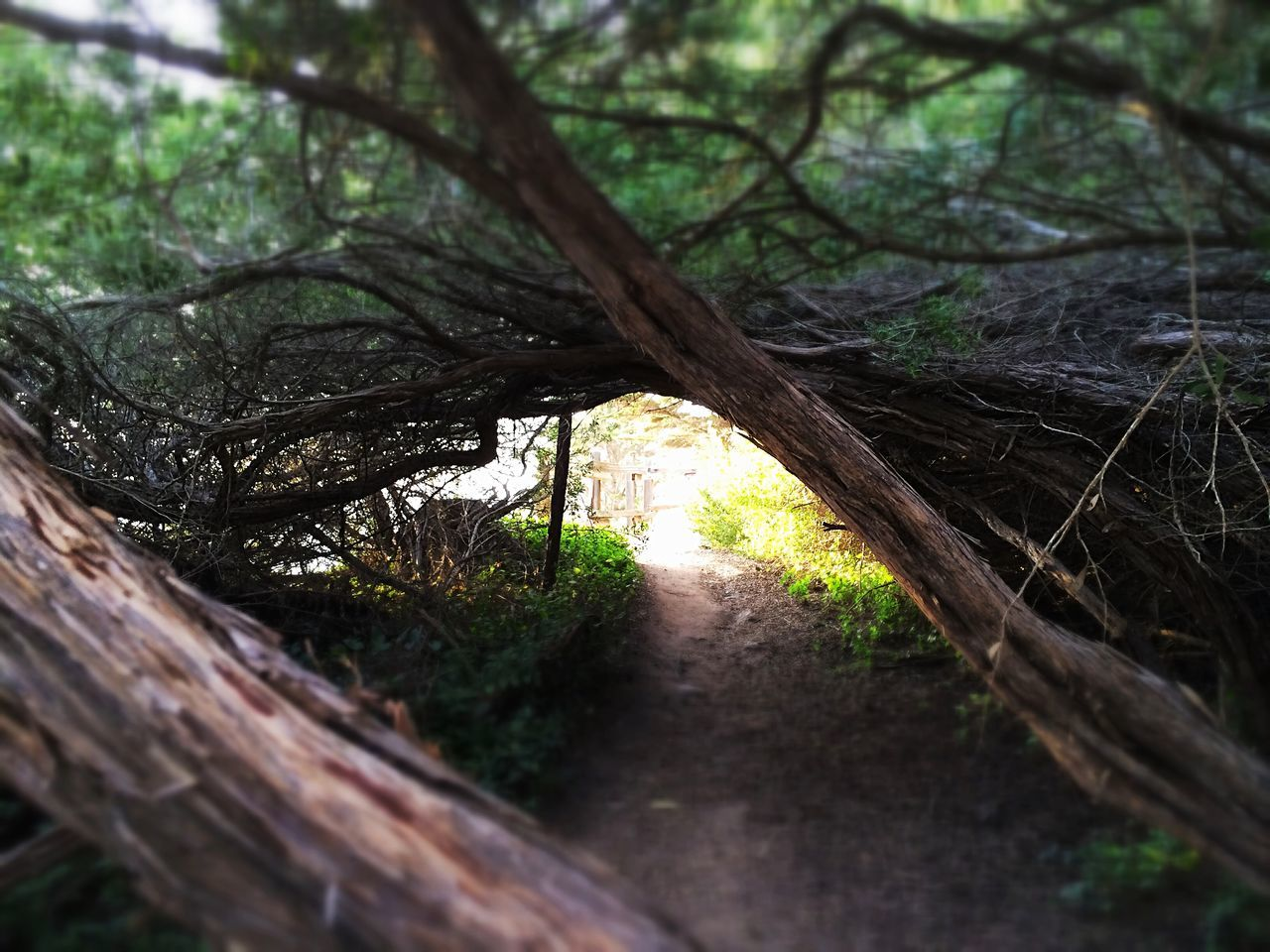 Exploring New Ground Exploring The Unknown Off The Beaten Path The Great Beyond Getting Lost Canopy
