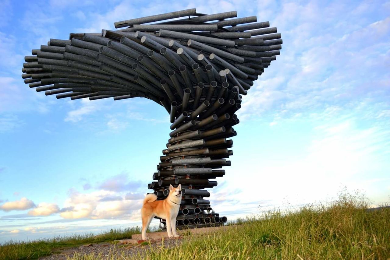 Singing Ringing Tree in Burnley, Lancashire. Singingringingtree Burnley ArtWork Sculpture Landmark Design Lancashire