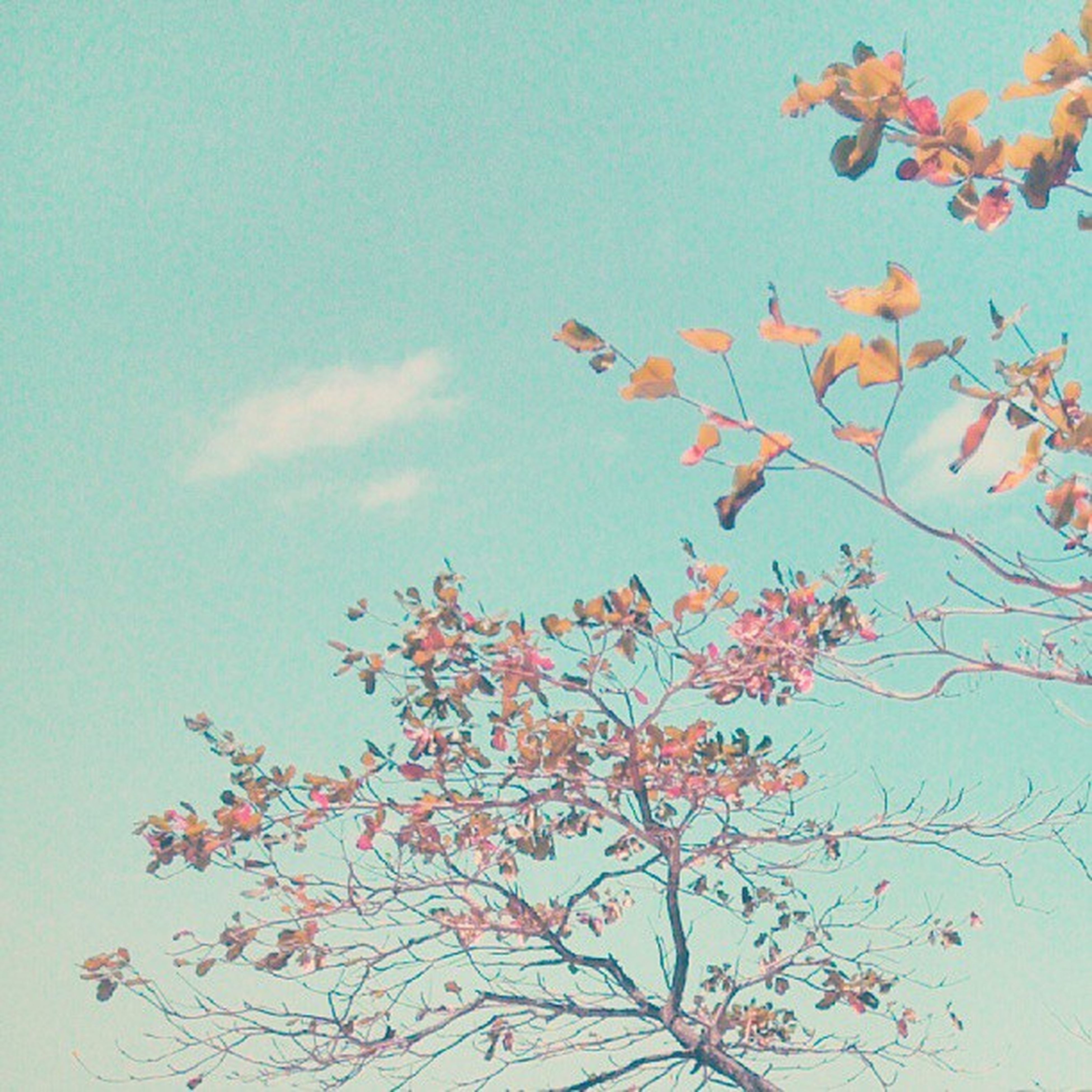 low angle view, autumn, clear sky, blue, tree, sky, change, branch, growth, beauty in nature, nature, leaf, season, day, flower, tranquility, outdoors, no people, fragility, high section