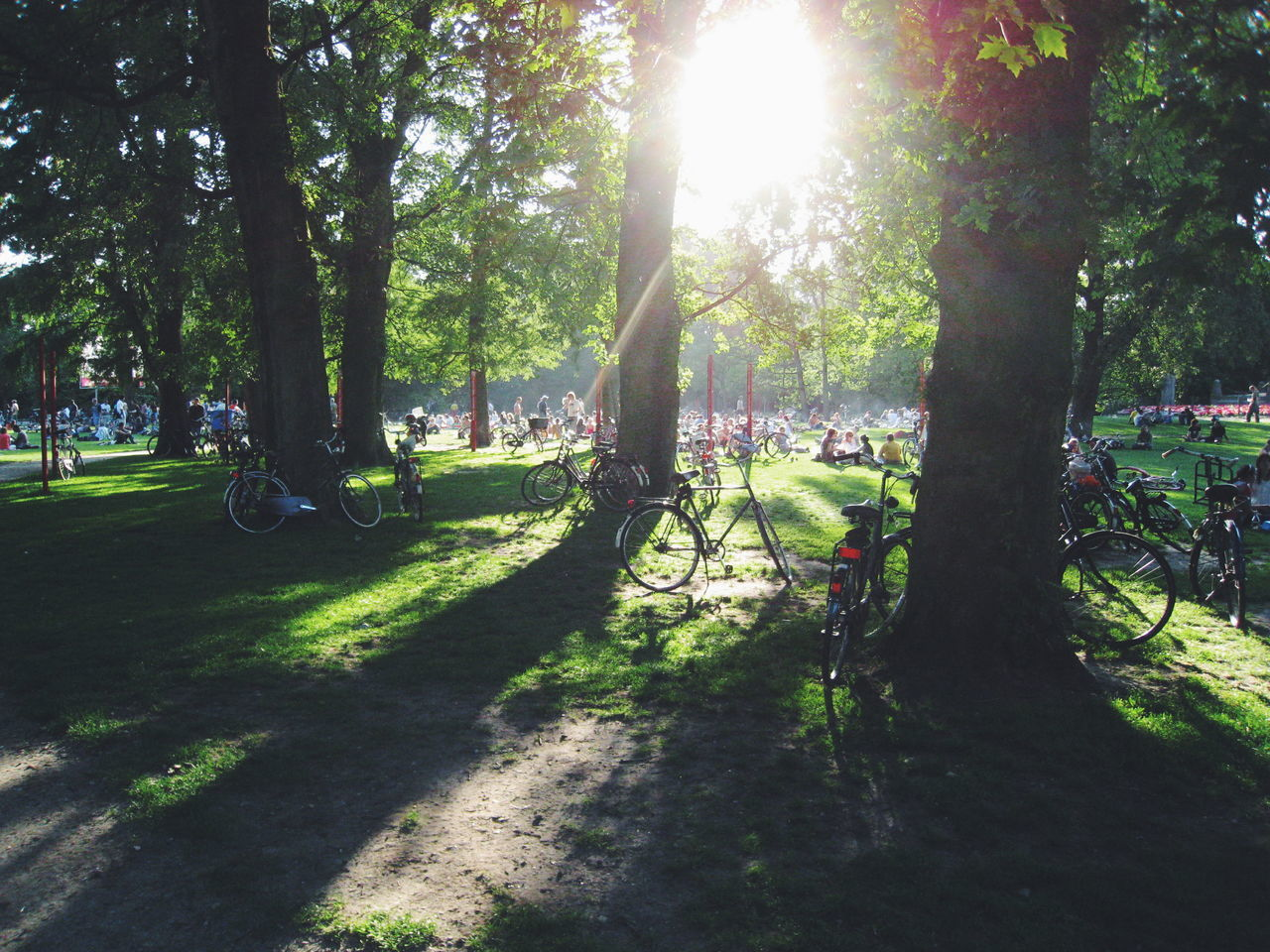 Eyeemphoto Hanging Out Bicycle Sun Glare People Park Sunny Day Relaxing Moments Vondelpark Amsterdam