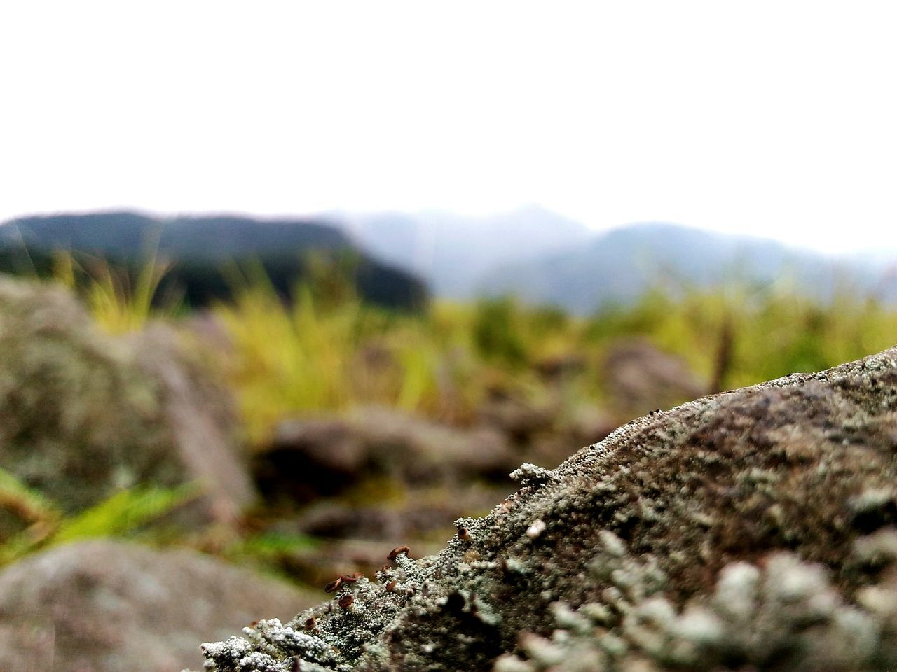 Auto focus part 1 Nature Landscape Outdoors No People Beauty In Nature Mountain Merapimountain Merapi Yogyakarta Traveling Adventure Nature DiscoverIndonesia INDONESIA PhonePhotography Photooftheday Photography Explore Jawatengah Autofocus