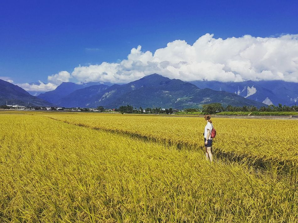 Rural Scene Agriculture Landscape Field Beauty In Nature Sky Nature Cloud - Sky Farm Mountain Yellow Mountain Range Girl In The Field Beyond Endlessness Alone Taiwan Taitung,taiwan Outdoors Scenics Photography Nature Photography Photo Travel