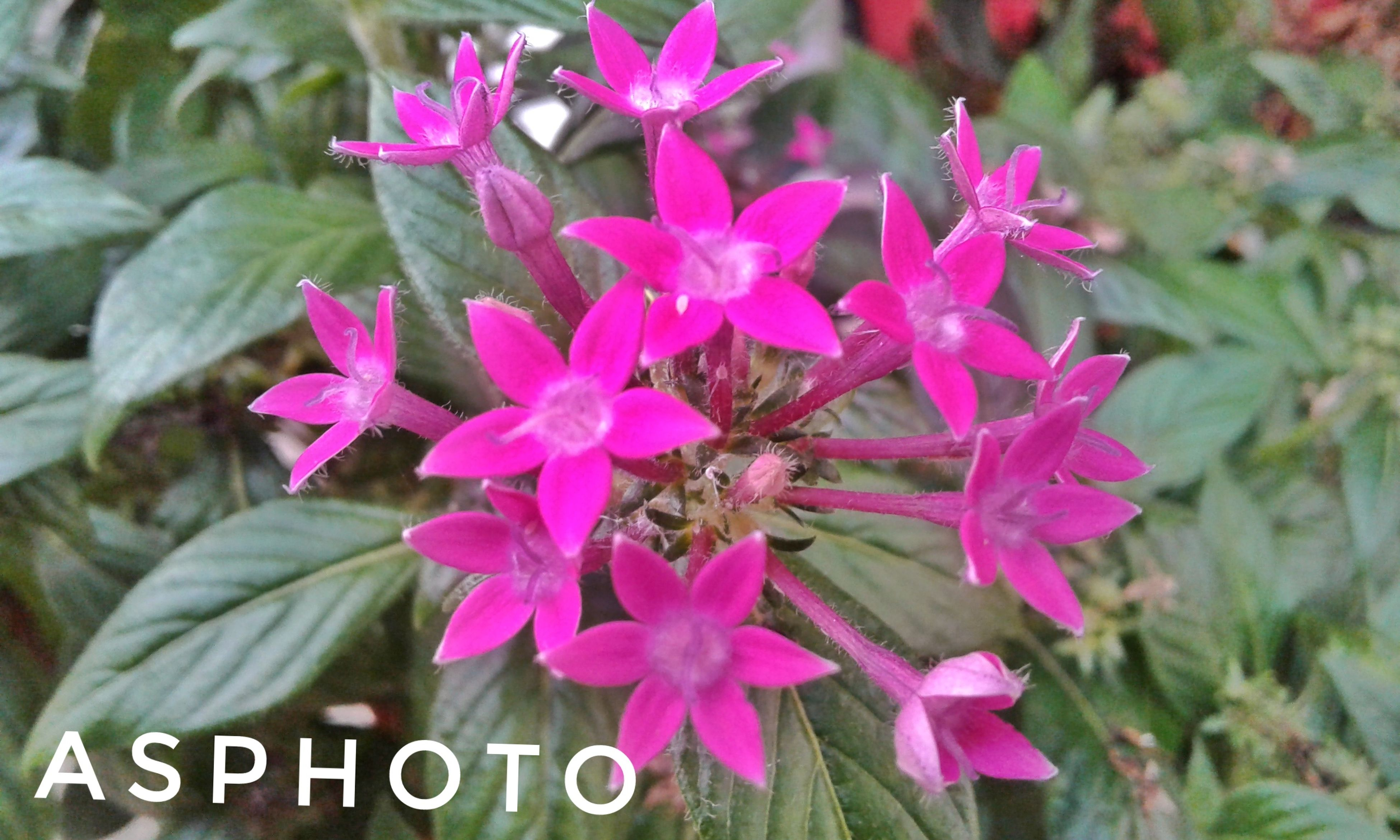 flower, pink color, purple, petal, beauty in nature, fragility, nature, freshness, growth, no people, flower head, blooming, day, outdoors, animal themes, insect, close-up, pollination