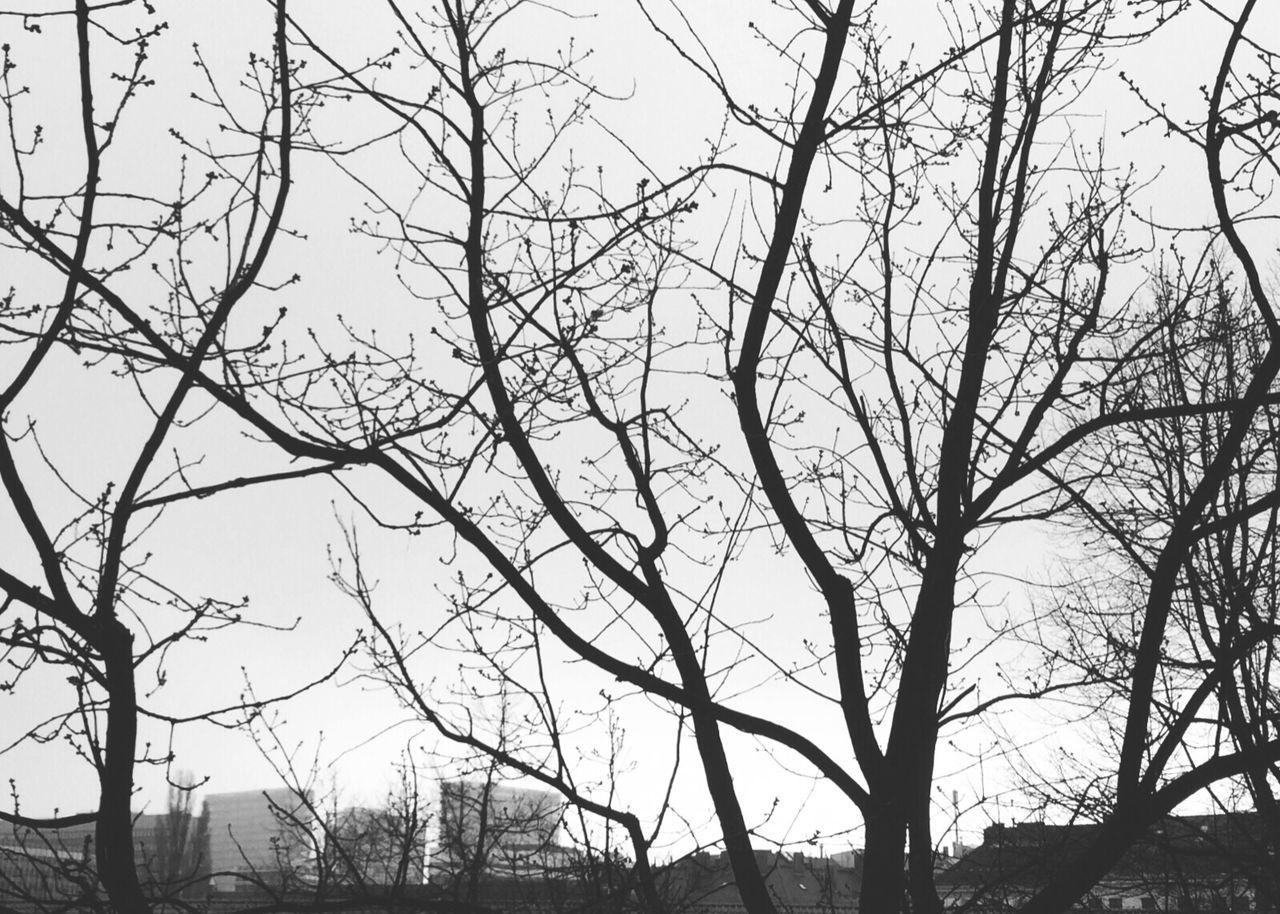 Blackandwhite Skyline Hamburg Trees Urban Samesamebutdifferent