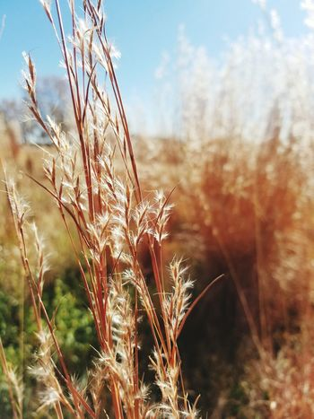 Colorado wild grass Nature Focused Close-up Wild Grass