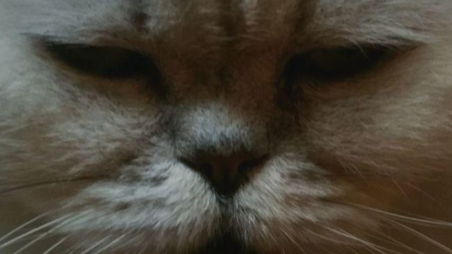 My Cat Freddie Feline Pet Cats Eyes EyeEm Eyes