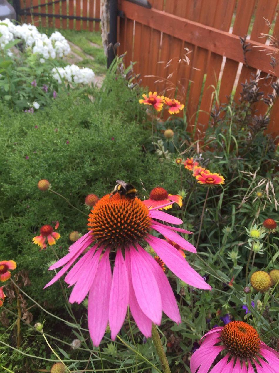 Цветы цветы шмель Flowers,Plants & Garden