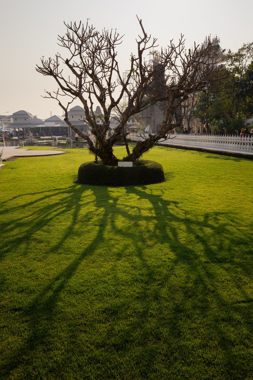 grass, tree, shadow, golf, nature, green color, golf course, sunlight, beauty in nature, day, growth, tranquil scene, tranquility, no people, bare tree, landscape, outdoors, scenics, built structure, green - golf course, sky, architecture