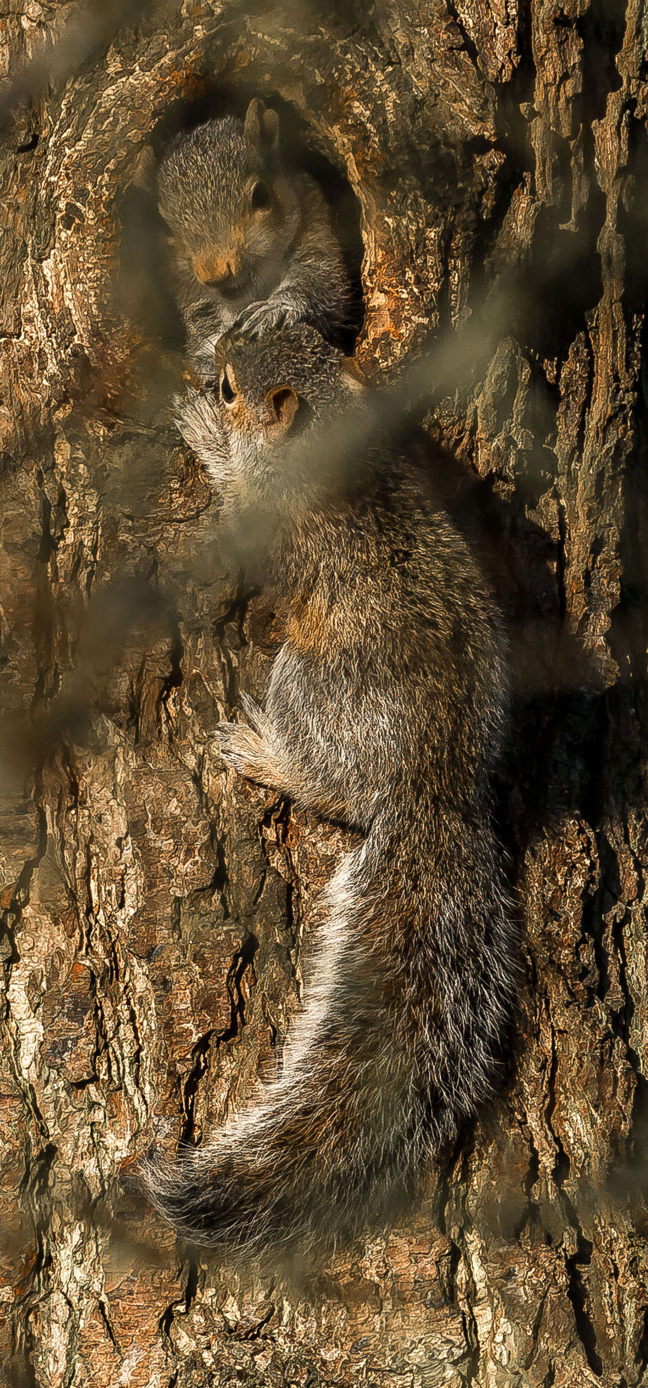 Playing in the sun Nature Outdide Playing Spring Springtime Squirell On Tree Squirellsrcute Wildlife & Nature Young Squirells The Great Outdoors - 2016 EyeEm Awards Natures Diversities