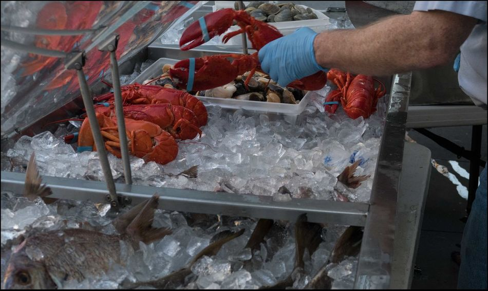Beautiful stock photos of lobster,  Dead Animal,  Food And Drink,  Glove,  Holding