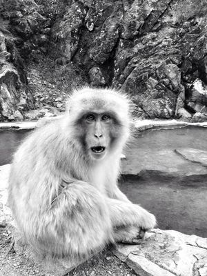 black and white at 地獄谷野猿公苑 (Snow Monkey Park) by Deandre Scott