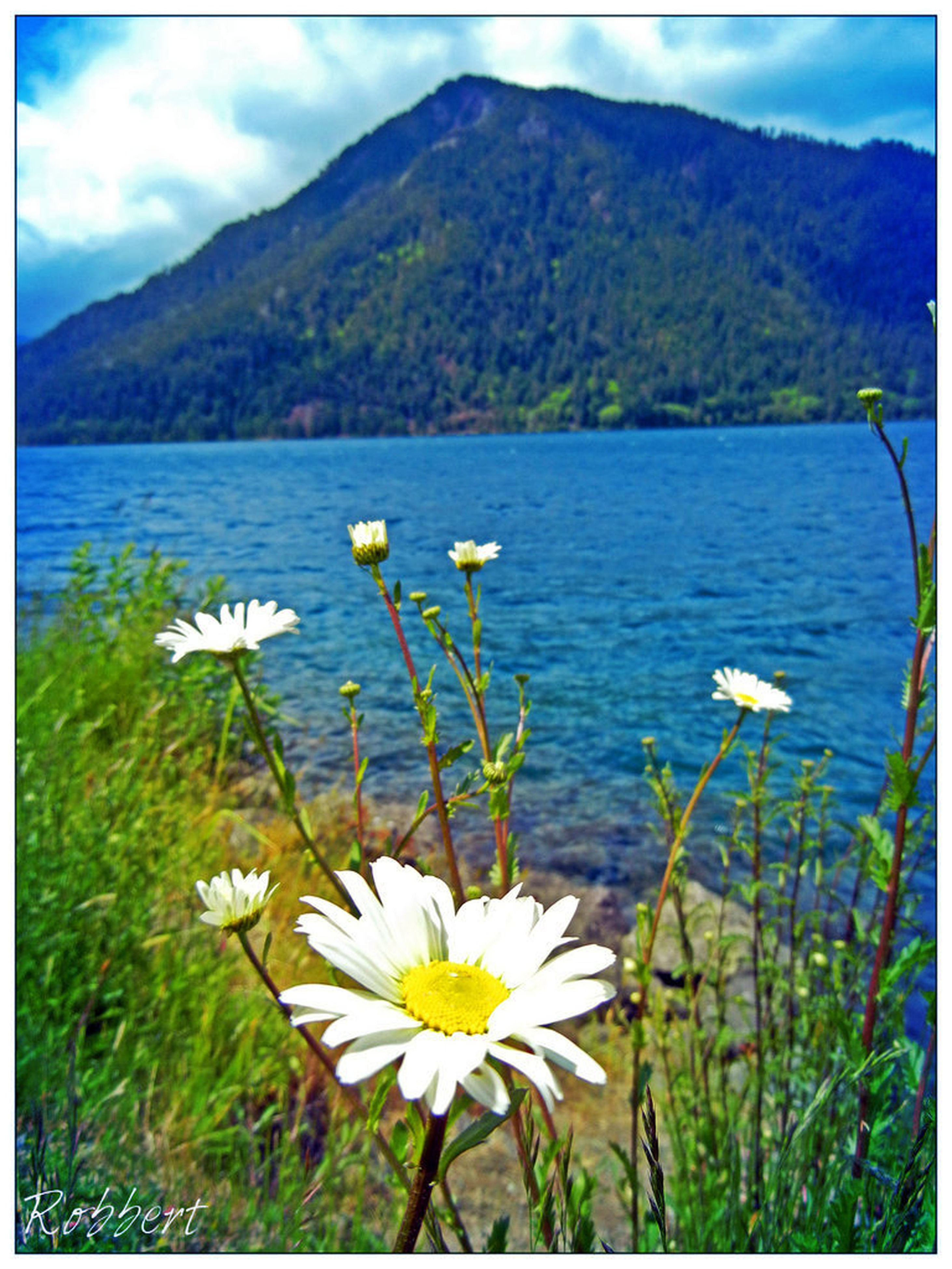 flower, beauty in nature, water, lake, mountain, growth, tranquil scene, nature, plant, transfer print, freshness, tranquility, scenics, white color, fragility, blooming, petal, mountain range, wildflower, sky