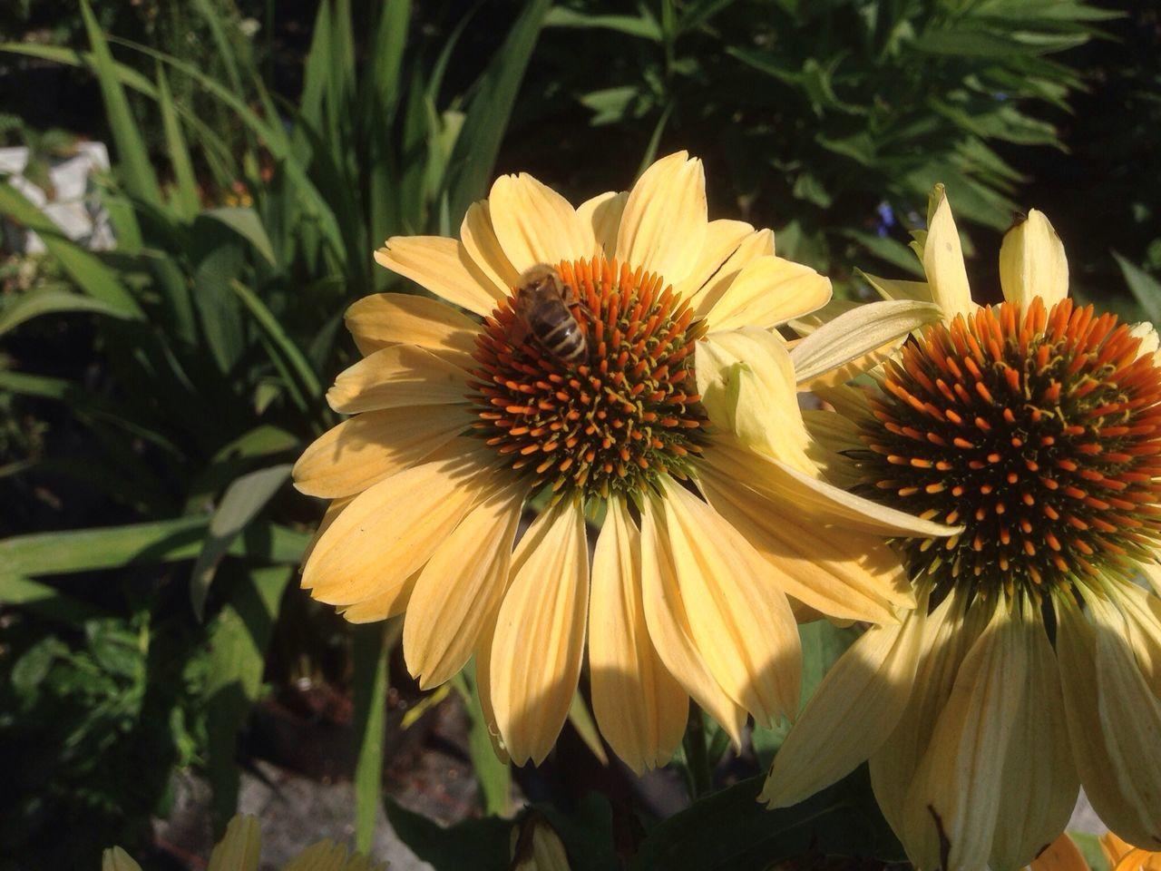 Flower Honey Bee