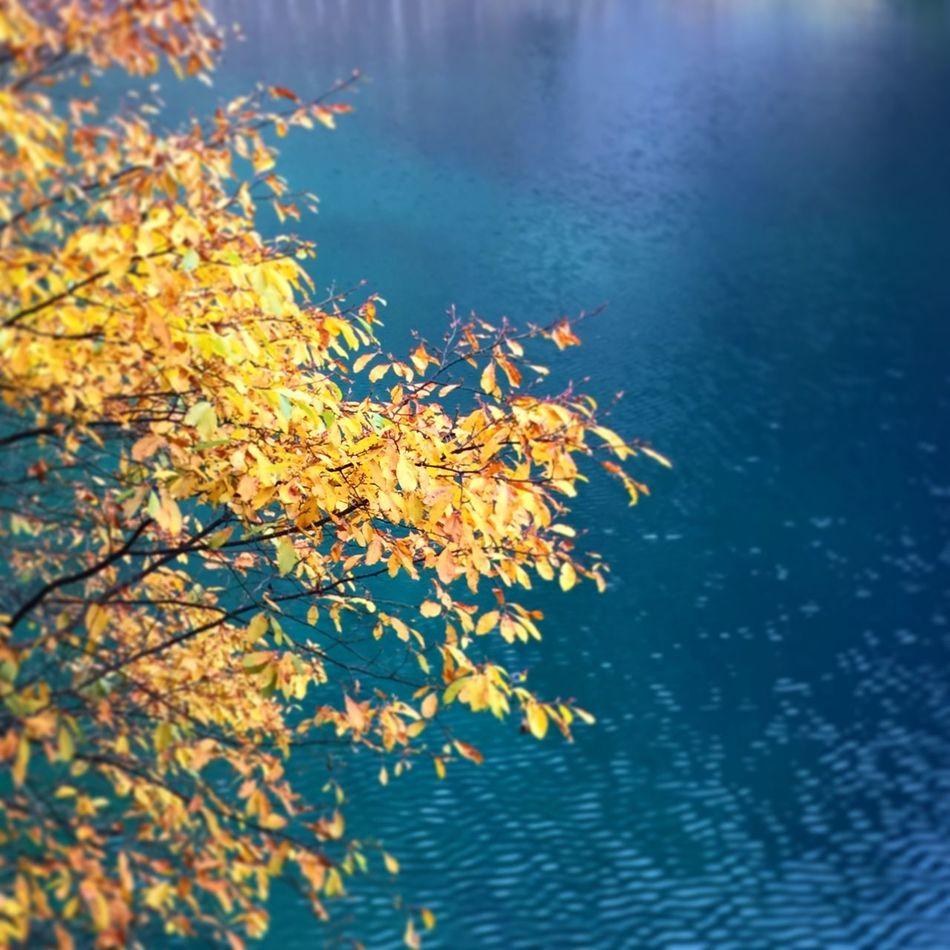 Beautiful EyeEm Nature Lover Landscape_Collection EyeEm Best Shots Taking Photos Traveling Landscape Autumn