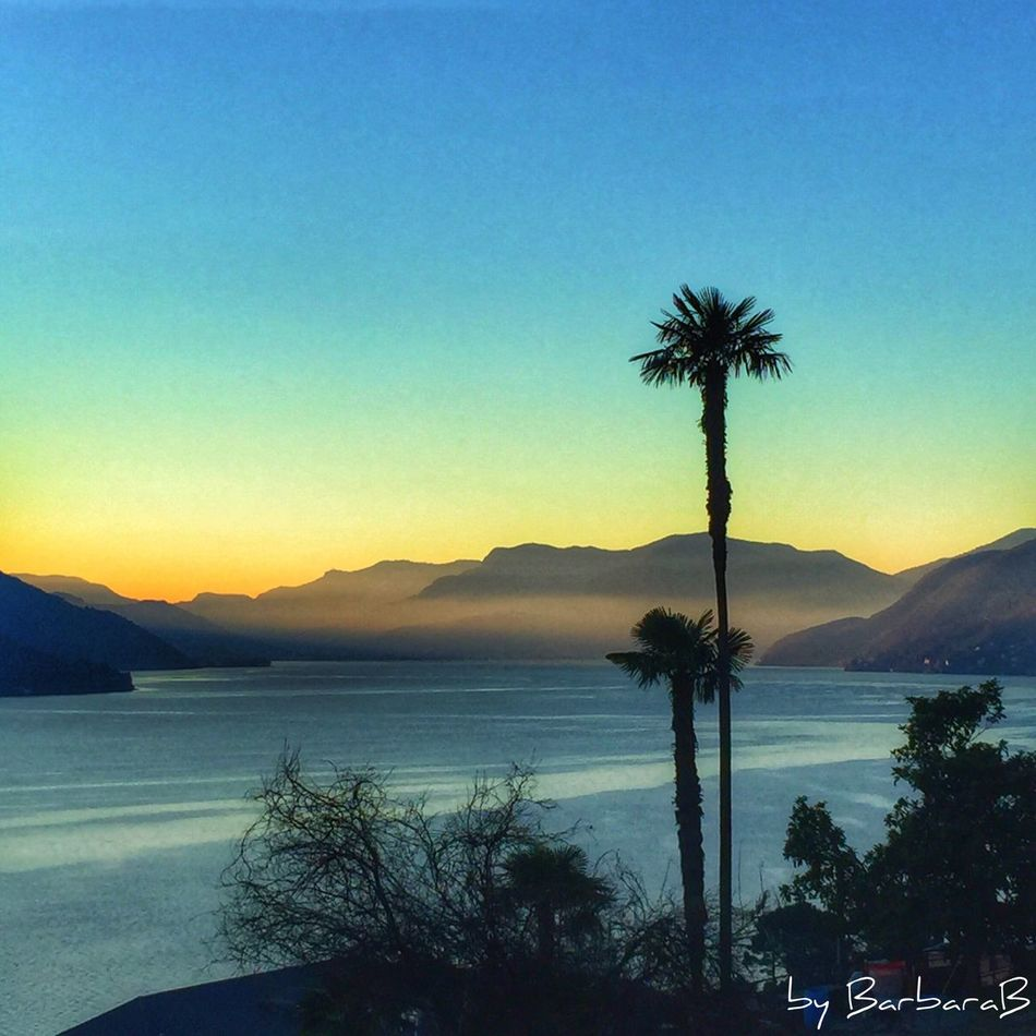Sunset Sunset_collection Palm Tree Lake Lake View Beauty In Nature Water Scenics Nature Clear Sky Horizon Over Water Idyllic Landscape Lagomaggiore Ticino Switzerland view to Luino Lombardia Cannobio Piemonte Italia Italy ✨🇨🇭🇮🇹🌊🌴🌴