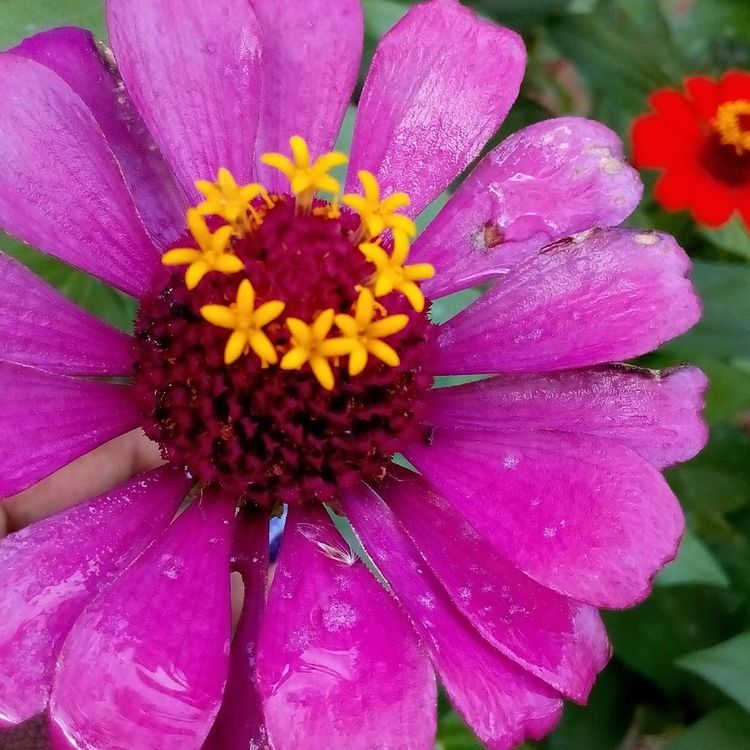 Flower Fragility Freshness Flower Head Nature Pink Color Petal Beauty In Nature Pollen Blooming Growth Day No People