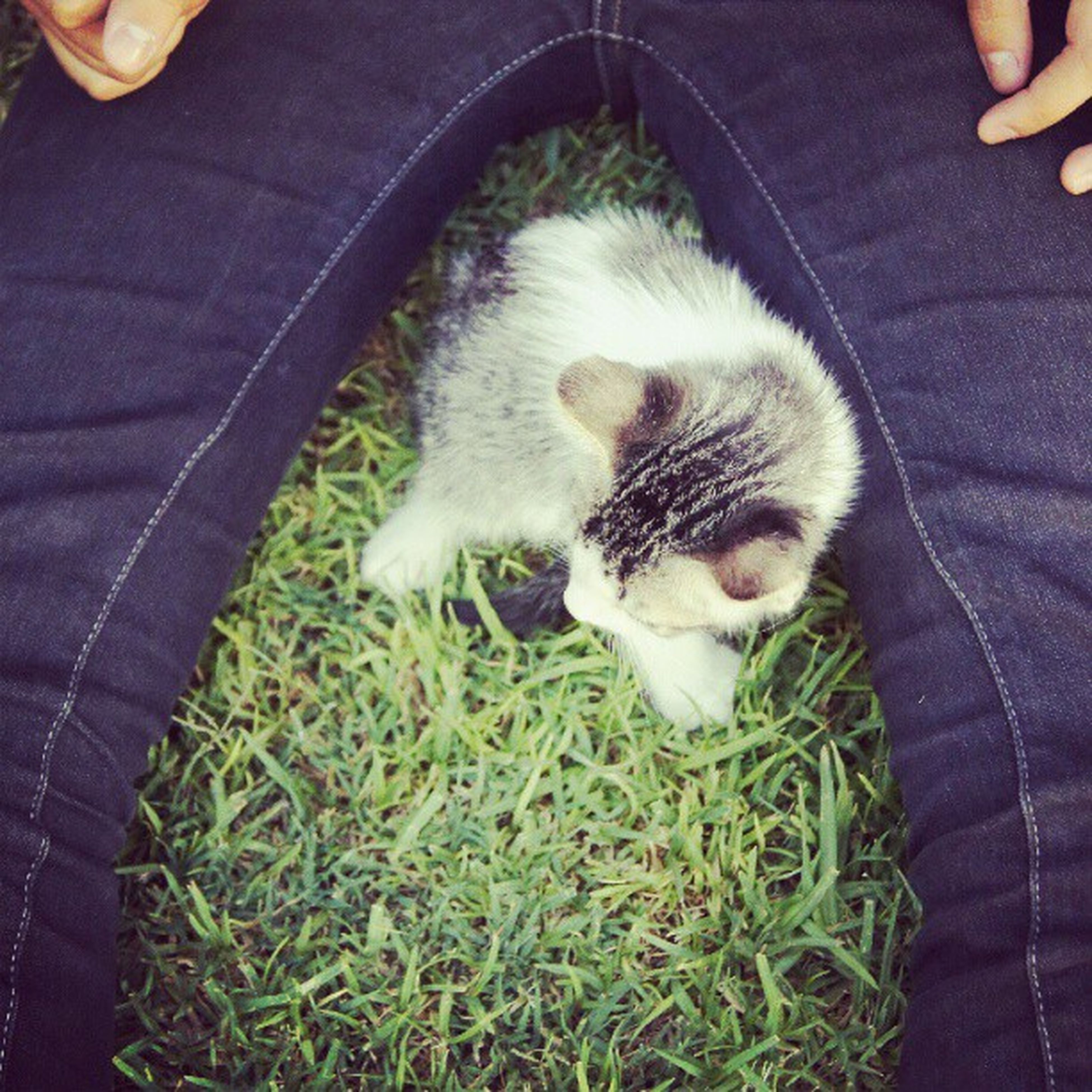 pets, animal themes, domestic animals, one animal, mammal, dog, person, pet owner, grass, holding, lifestyles, high angle view, young animal, part of, unrecognizable person, leisure activity, men