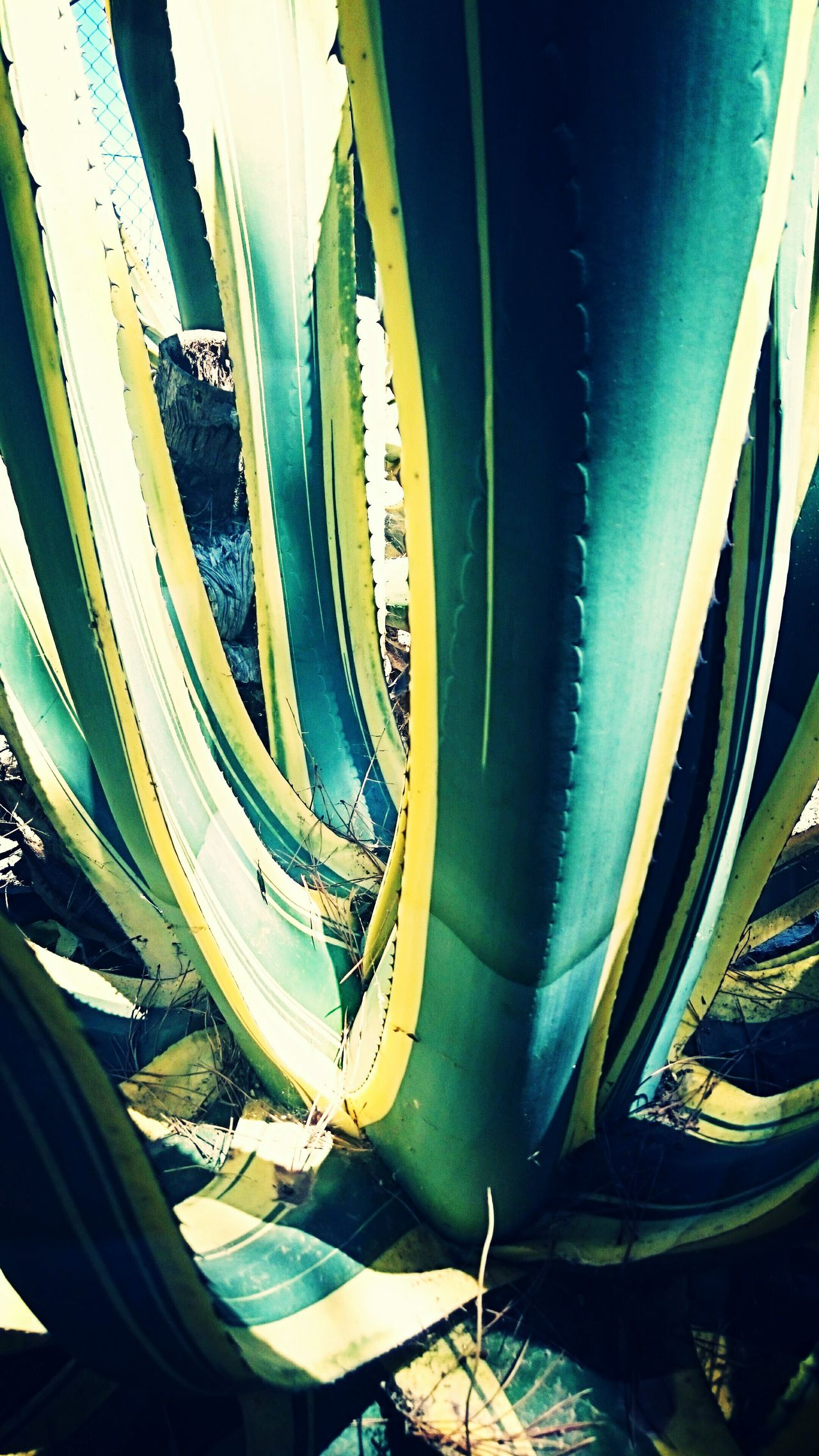 Cactus Hanging Out Taking Photos Check This Out That's Me Hello World Cheese! Relaxing Hi! Enjoying Life Pivotal Ideas First Eyeem Photo Home Is Where The Art Is Ocean Colour Of Life Hidden Gems  Color Palette Enjoying Life Hi! Relaxing Cheese! Hello World That's Me Check This Out Taking Photos Hanging Out