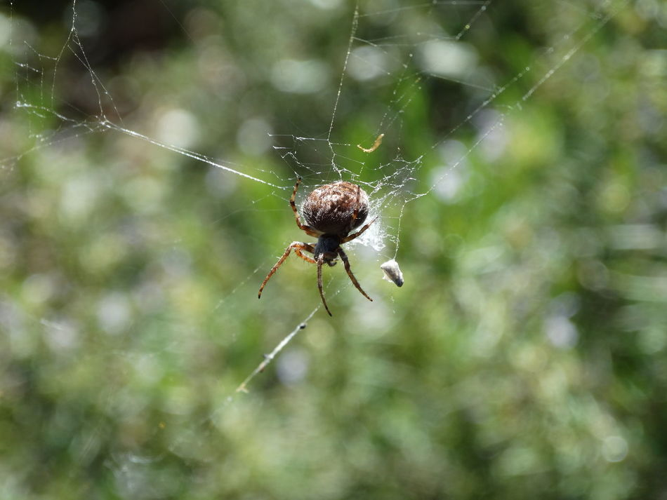 Animal Leg Animal Themes Animal Wildlife Animals In The Wild Beauty In Nature Close-up Complexity Day Focus On Foreground Fragility Insect Nature No People One Animal Outdoors Spider Spider Web Spinning Survival Weaving Web