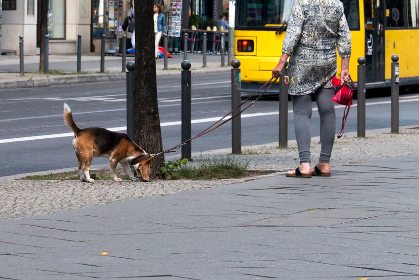 The Best Of Berlin Photographic Memory 06-12,June,2016 Animals Capture The Moment Colour Of Life Walking The Dog The Following Eyeemphoto Tram Legs People Snapshots Of Life Street Photography Walkin Th Dogs People Together Urban Exploration Morning Women Who Inspire You Low Section The Essence Of Summer Fashion Family Walking Around Beautiful Day Simple Moment Capture Berlin Fashion Stories