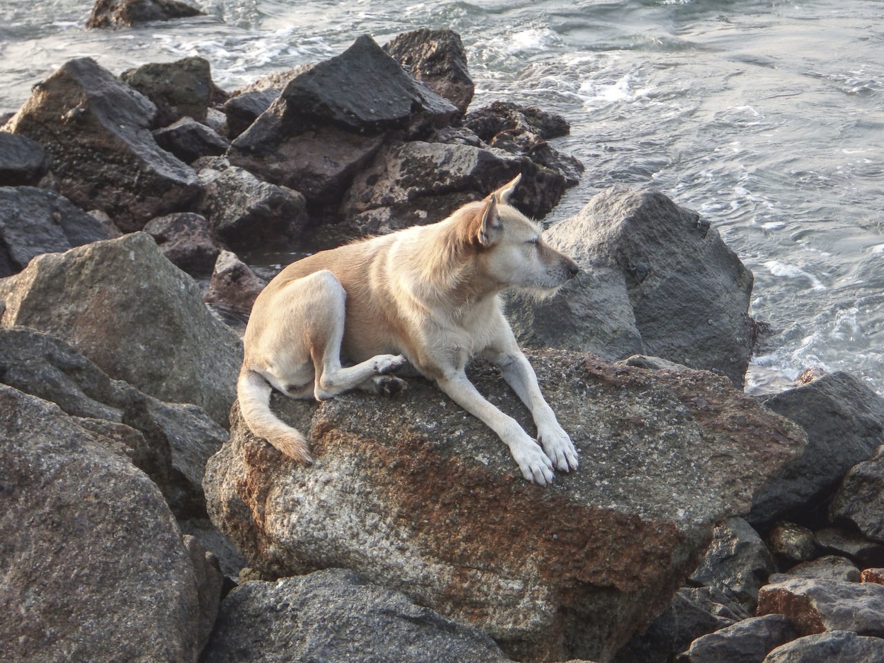 Animal Themes Beauty In Nature Dog Indian Ocean Jungle Beach Nature No People Old Dog Outdoors Relaxation Rock Rock - Object Rock Formation Rocky Beach Seaside Sri Lanka Stones
